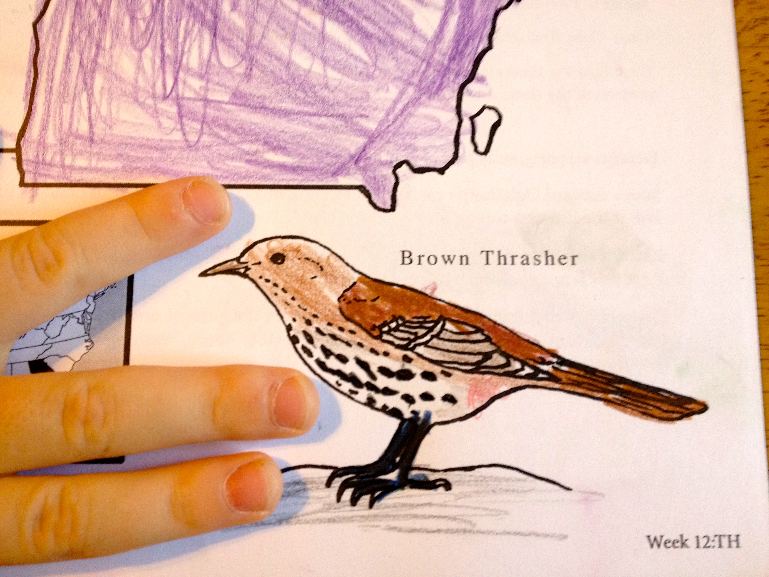 They Are Eager To Shade Their State Birds Just So And Capture The Exact Color Of Each Flower