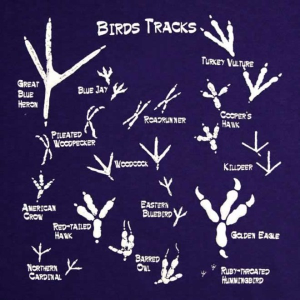 bird-tracks-animals-infographics-600x600-1